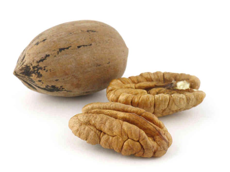 Внешний вид ореха пекан