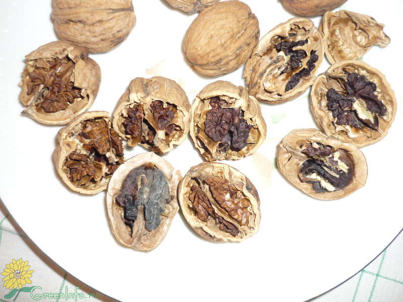 Плесень на грецких орехах
