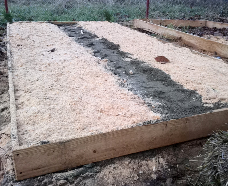 Семена кедра присыпали слоем песка