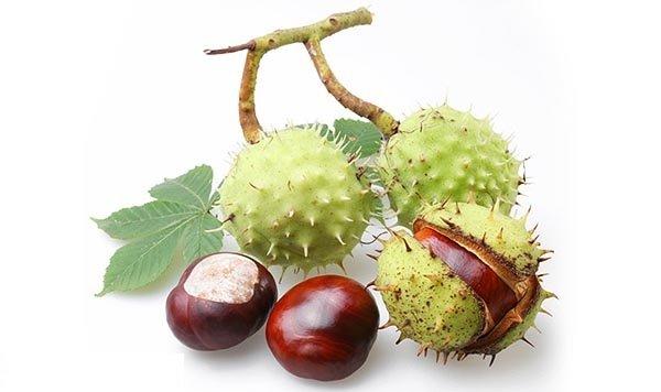 Внешний вид плодов каштана