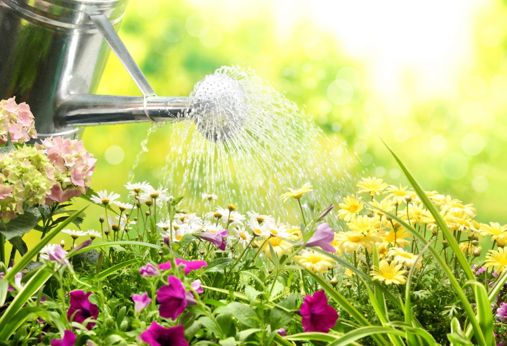 Процесс полива цветов с лейки