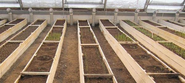 Грядки в вегетариуме собираются в виде коробов