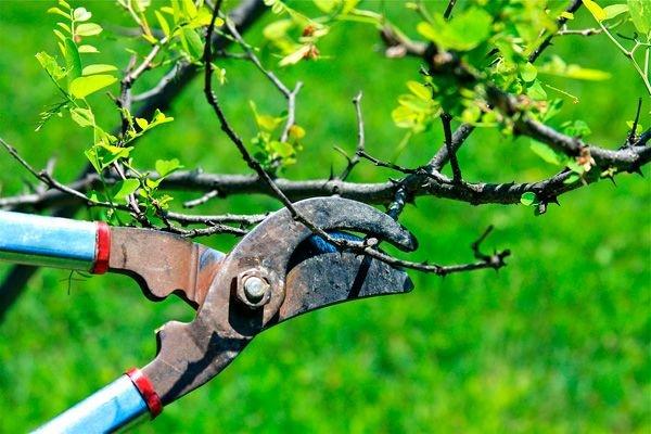 В некоторые дни работать с деревьями не рекомендуется