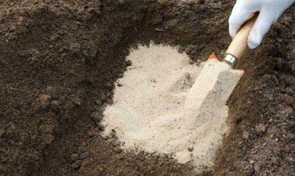 Как улучшить почву на садовом участке: эффективные способы