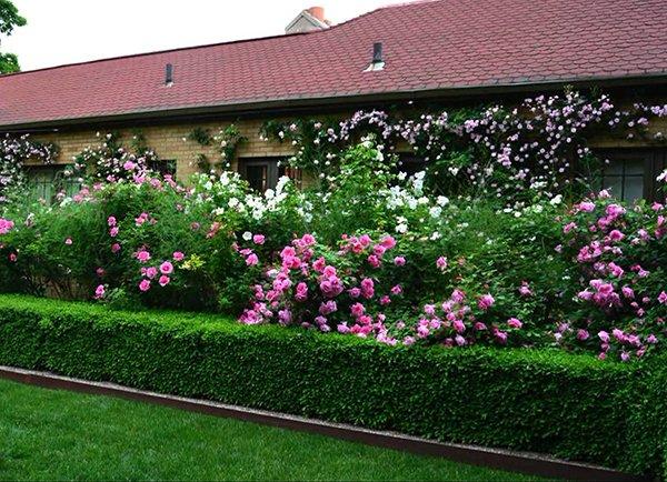 Живая изгородь - хороший способ зонирования участка