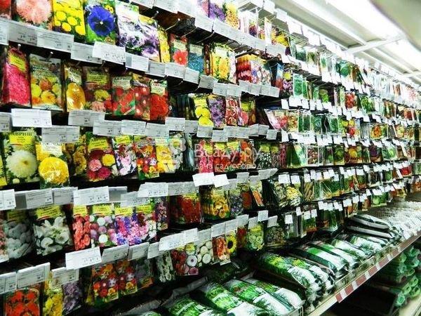 Семена рекомендуется покупать в специализированных магазинах