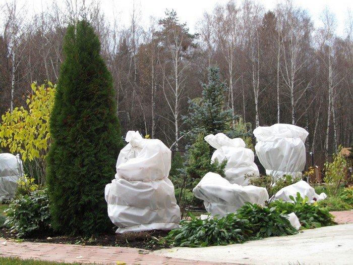 Прямо с 1 октября можно приступать к подготовке деревьев к зиме и весне
