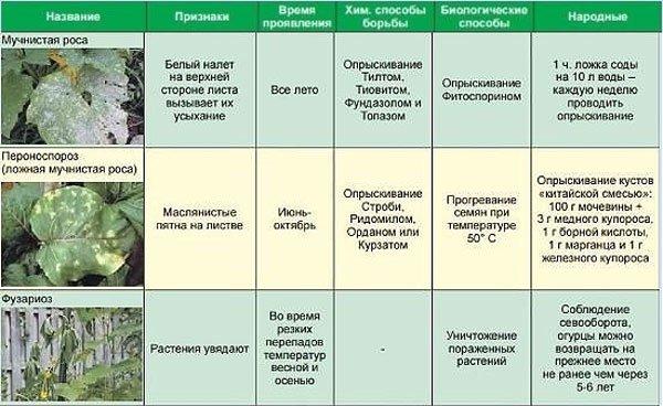 Способы лечения болезней огурцов