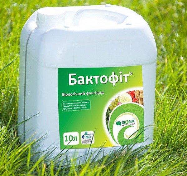 «Бактофит» используют при поражении огурца корневой гнилью