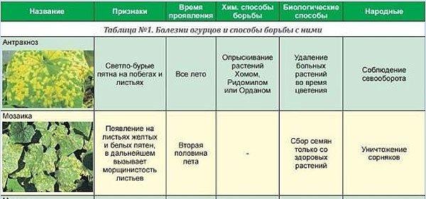 Список распространенных болезней огурцов