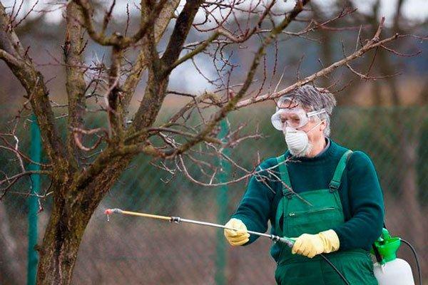 Защита абрикоса от вредителей и болезней
