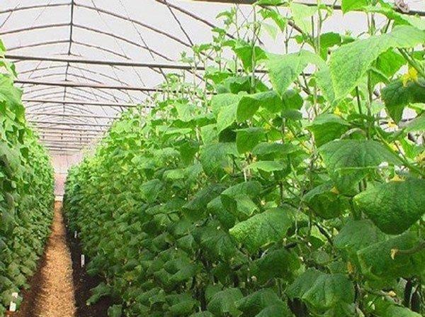 Хороший урожай - результат профилактических мер