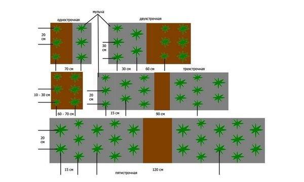 Схемы посадки клубники на огороде
