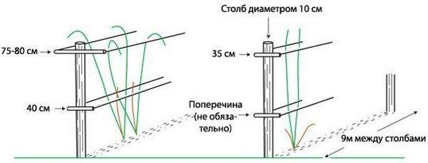 Шатровую конструкцию для малины располагают на больших угодьях