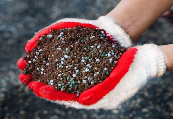 Дерево можно удобрять как органикой, так и минеральными веществами