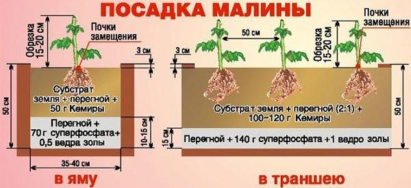 Возможные способы посадки малины