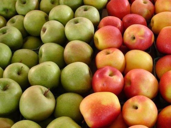 Сорт яблони Синап орловский самобесплоден