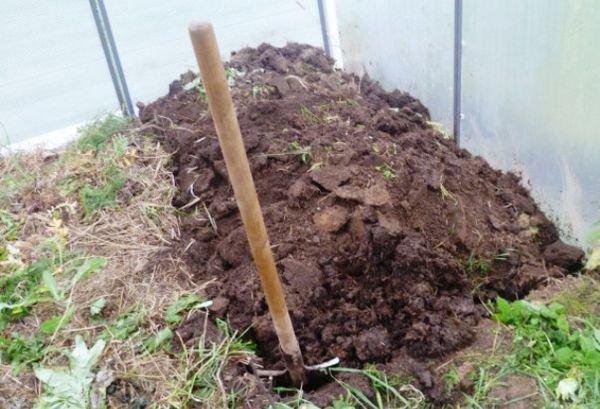 Замена почвы и ее дальнейшая обработка – самая сложная задача