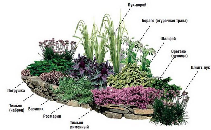 Схема высадки трав на альпийской горке