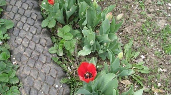 Из покрышек можно сделать садовую дорожку