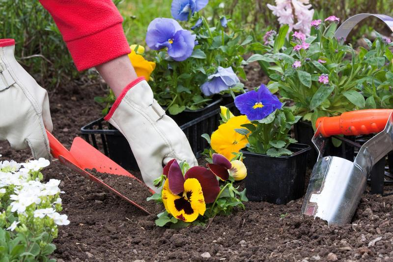 Молодой месяц – оптимальное время для посадки цветов
