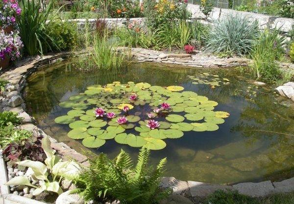 Искусственные водоемы можно украсить растениями