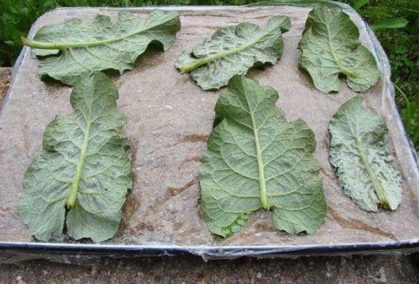 Изготовление гипсовых листков для сада