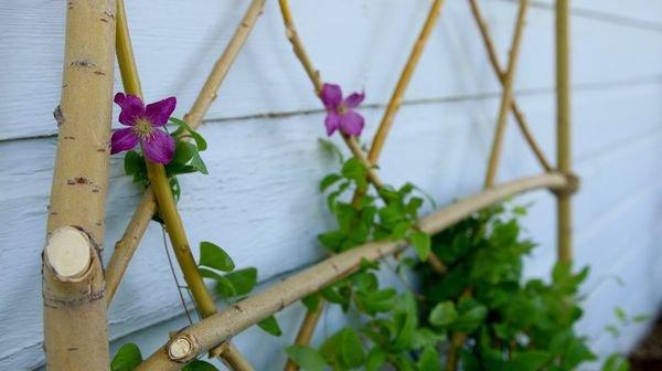Шпалера из веток для сада